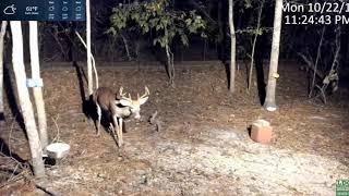 Download Live Deer Cam SE Ga - 8pt grunts orders 10-22-18 Video