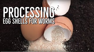 Download How I Process Egg Shells For My Worm Bins Video