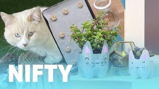Download 9 DIY Projects For Cat Owners Video