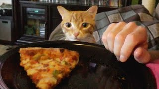 Download Trying To Eat with a Cat Around! Video