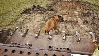 Download Veterinarian Squishes Dog With Bulldozer Video