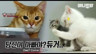 Download 사람들이 너네 귀엽다고 난리났는데 주먹 꺼내기 있냐 ㅣ Kitten Clenches Fist When Meeting A Papa Cat For The First Time LOL Video