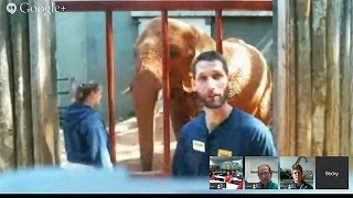 Download 96 Elephants Hangout On Air Video