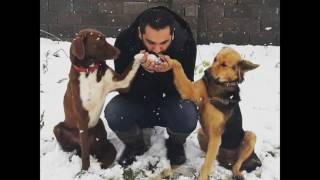 Download دهکده سگهای سزار گیلان Video