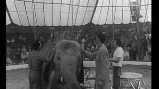 Download Vorschau: Tiger und Elefanten mit Louis Knie (Zeeb 1975) Video