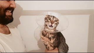 Download Kedilerimiz PİRELENDİ YIKIYORUZ - Gümüş AĞLIYOR Video