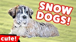 Download Funniest Dogs Playing In Snow Videos Weekly Compilation 2016 | Kyoot Animals Video