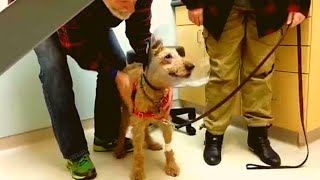 Download After This Blind Dog Got Surgery To See Again, His Adorable Reaction Touched 14 Million Hearts Video