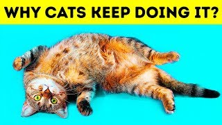 Download Why Cats Lie on Their Backs When They See You Video