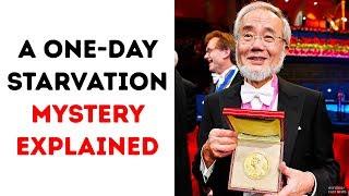 Download A One-Day Starvation Secret Got the Nobel Prize Video