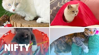 Download 5 Adorable DIY Projects For Your Cat Video