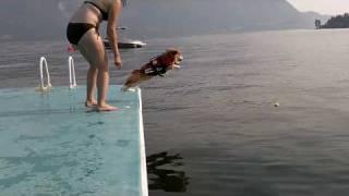 Download Corgi Flop Video