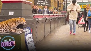Download LEOPARD PRANK! CAMDEN TOWN Video