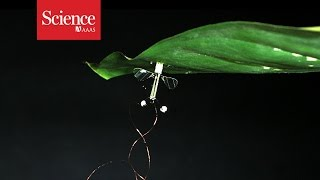 Download Flying robots can conserve energy by perching Video