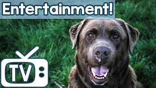 Download Animal Entertainment TV for Dogs! Hours of Sheep & Horse Footage for Dogs to Relax and Chill Out To! Video