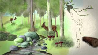 Download International Day of Forests 2014 Video