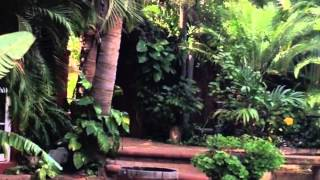 Download The Bungalows Hotel Cabo San Lucas Video