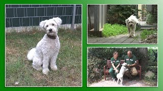 Download Hundevermittlung - Juni/Juli 2018 (Tierheim Hannover TV) Video