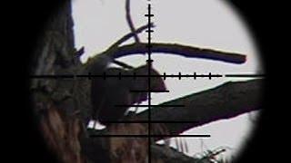 Download FX Bobcat .22 Squirrel Pest Control Video