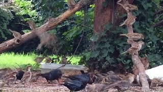 Download Monday 08-14-2017 06:30 pm - 07:05 pm Wildlife Feeder Cam Video