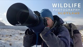 Download PHOTOGRAPHING STAGS in SCOTLAND   Behind the scenes with wildlife photographer Morten Hilmer Video