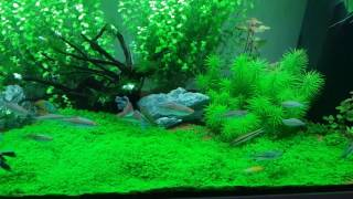 Download How to make ro water good for use in planted tank Video