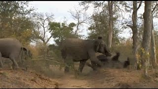 Download Safari Live : Mad Ellie Mom pushes down another female Ellie on July 10, 2016 Video