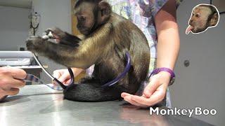 Download Monkey Vet Visit! Video