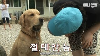 Download Dog Taebong which is always holding a stone in its mouth♡ Video