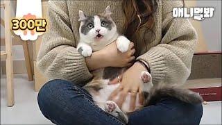 Download 고양이는 똑똑하다. ㅣBANG The World's Smartest Cat Plays Dead After A Finger Shot Video