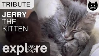 Download Tribute For Jerry from Kitten Rescue Los Angeles Video