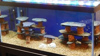 Download DIY/How to make a rock/slate/structure for a fish tank/aquarium Video