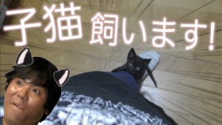 Download 【黒猫】保護した子猫飼う?野生に返す? Video