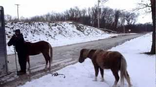 Download March 7, 2013 Rescue 001 Illinois Horse Rescue of Will County Video