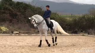 Download ATILA CXVII - Stunning PRE dressag gelding piro-free For Sale #thebestspanishhorses Video