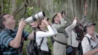 Download COLOMBIA BIRDFAIR 2016 - English Video