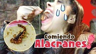 Download Comiendo ALACRANES comida exótica de MÉXICO Video