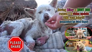 Download NEW VIDEO: Saving Miley: a MUST SEE rescue + a video update ONE year later!!! Please share. Video