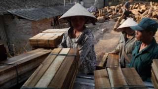 Download Состояние лесов мира 2016: леса и сельское хозяйство – вызовы и возможности землепользования Video