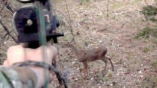 Download Double Doe Archery Kill - Oct 14, 2014 Video
