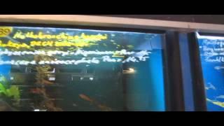 Download Aquarien Meyer Berlin Video