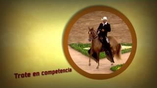 Download Aprenda la diferencia entre el paso Trote y Galope de los Caballos- TvAgro por Juan Gonzalo Angel Video