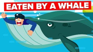 Download What If a Whale Accidentally Swallowed You? Video