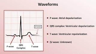 Download Intro to EKG Interpretation - Waveforms, Segments, and Intervals Video