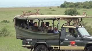 Download Cheetah jumps into a Safari Vehicle - Masai Mara - Kenya Video