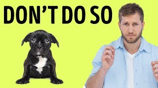Download 12 Things Your Dog Hates About You Video