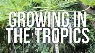 Download GROWNIG IN THE TROPICS!! Video