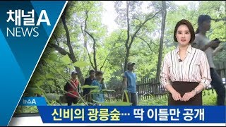 "Download 신비의 광릉숲…""딱 이틀만 일반인에 개방합니다"" Video"