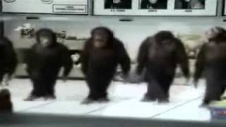 Download MAJMUNI PRAVO VLASKO KOLO Video