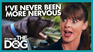 Download Terrifying Car Journey with Angry Great Danes   It's Me or The Dog Video